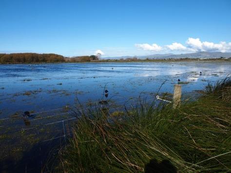 Travis wetland